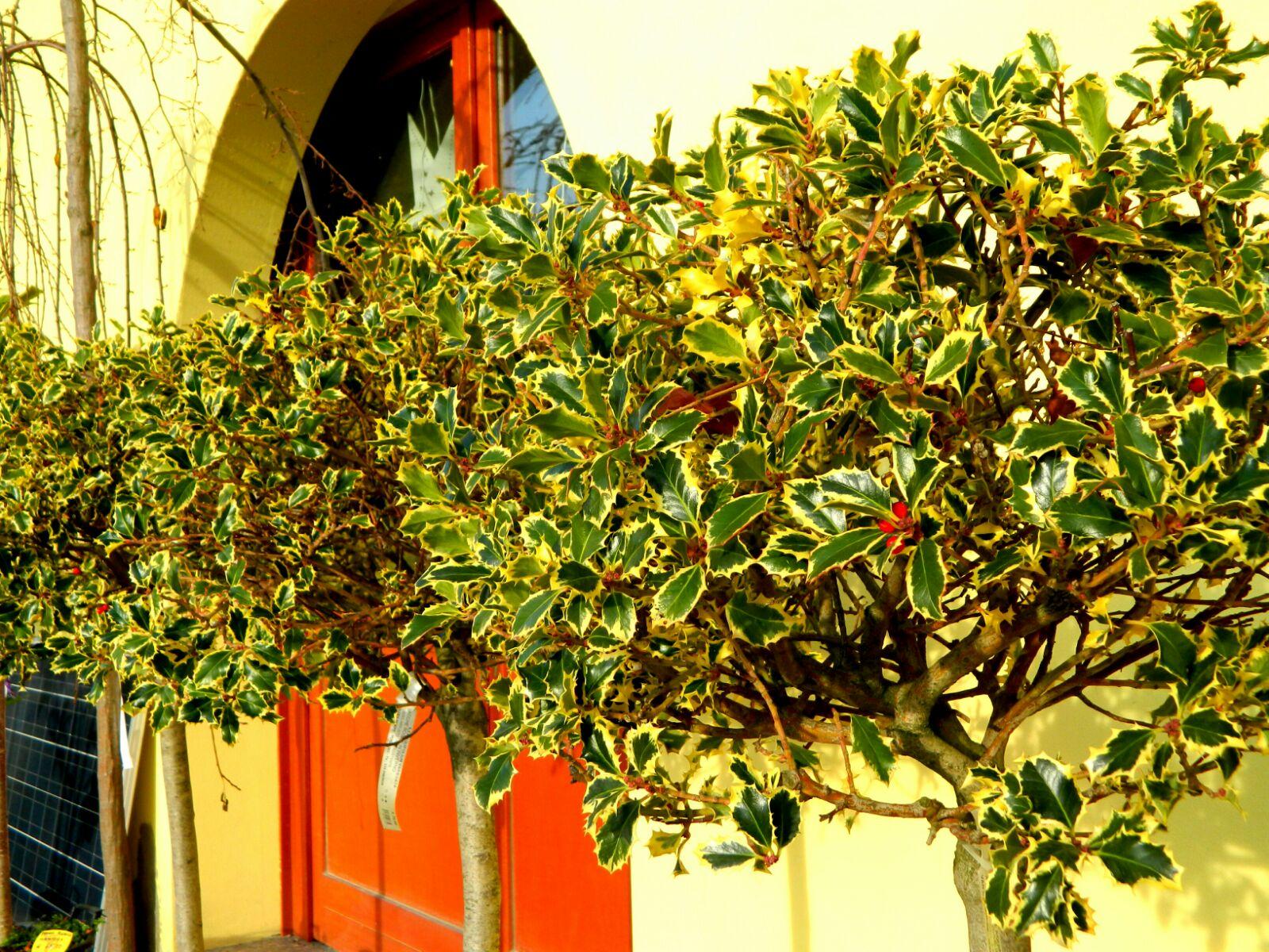 Vendita piante online for Vendita piante acquario online
